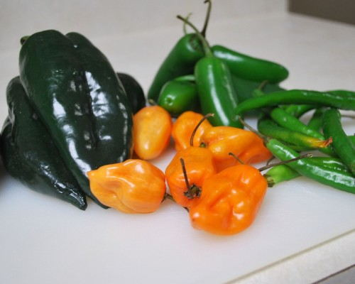 Habaneros, jalapenos, poblanos and long hot peppers were available at the grocery store.